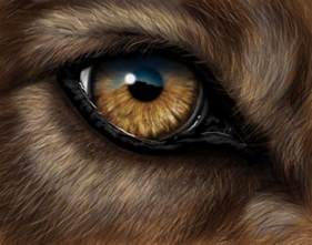 wolf eye color wolf eye by krats on deviantart