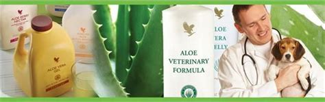 Aloe Vera Detox For Birds by 17 Best Images About Forever Living Equine Nutrition On