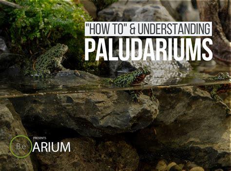 paludarium complete care guide   build bantam