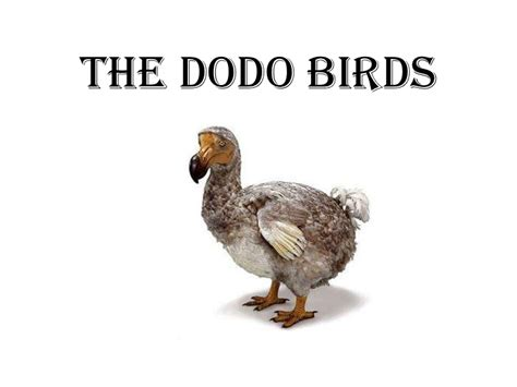 what can a bird do the dodo birds