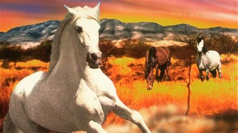 blm mustang roundup blm offers tours of next big mustang roundup in