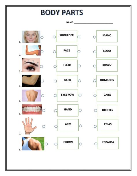 esl printable worksheets body parts body parts the parts of the body worksheet