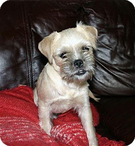 pug rescue columbus ohio adopted puppy columbus oh pug miniature schnauzer mix