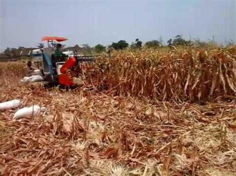Mesin Pemipil Jagung Canggih proses panen jagung mengunakan mesin canggih doovi