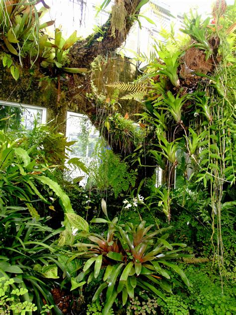 epiphyte tree in the exotic rainforest rare tropical plants