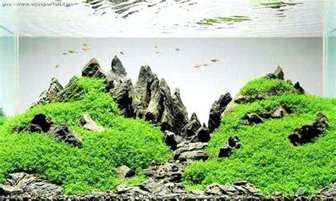 aquascape definition aquascape d 233 finition et explications