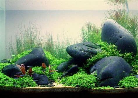 aquarium ideen 220 ber 1 000 ideen zu aquarium deko auf