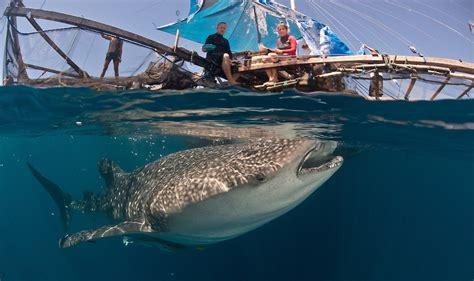 wisata bahari hiu paus