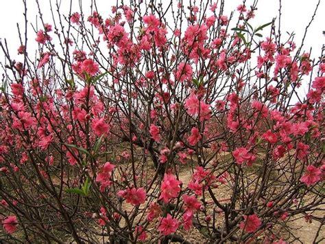 arbusti con fiori pianta con fiori rosa fiori di piante pianta dai fiori