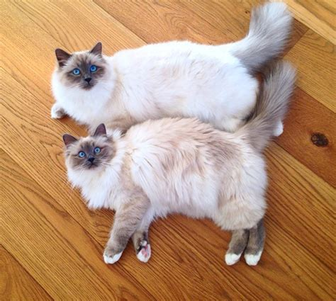 cat instagram the most adorable cats on instagram livingly
