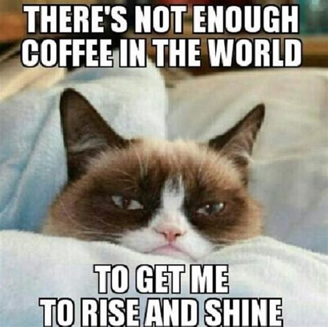 Grumpy Cat Best Meme - funny quotes grumpy cat quotesgram