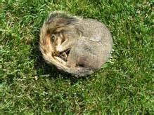 how to dispose of a dead how to dispose of a dead animal boulder county