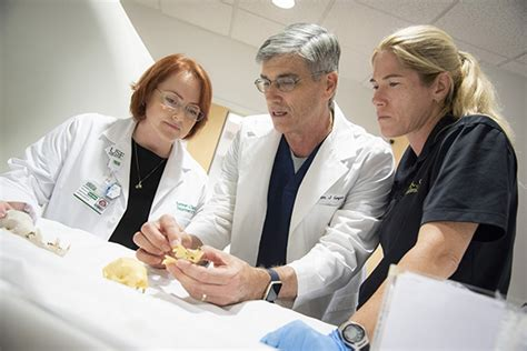 Usf Mba Program Director by Usf Health News Sloth Benefits From Unlikely