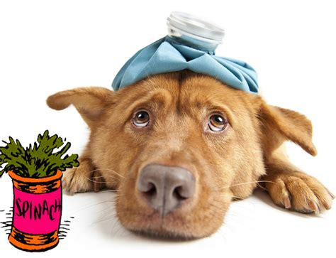 is spinach for dogs can dogs eat spinach how can i give spinach to my