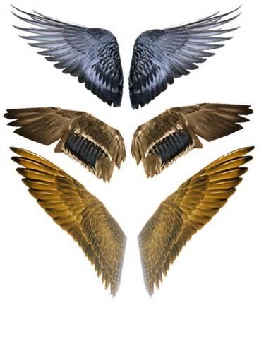bird wings for bird of prey cecelia clark series book 2