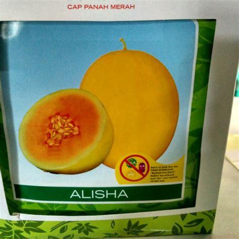 Benih Tanaman Buah Melon Alisha Isi 400 Butir jual benih melon sms wa 0857 7228 0300 dadimakmur