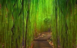 bamboo background 2027