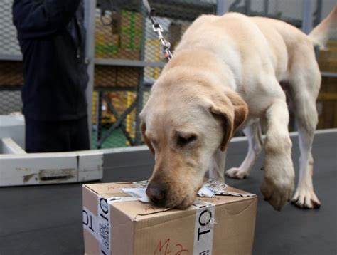 sniffer dogs amount of mailed illicit drugs hits record in s korea the korea times