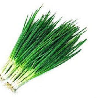 Bibit Daun Bawang benih daun bawang kecil