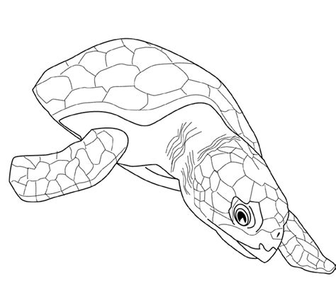 coloring pages for adults turtles adult coloring pages turtle az coloring pages