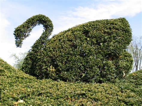 swan topiary pin by carla de la tour on lived it loved it