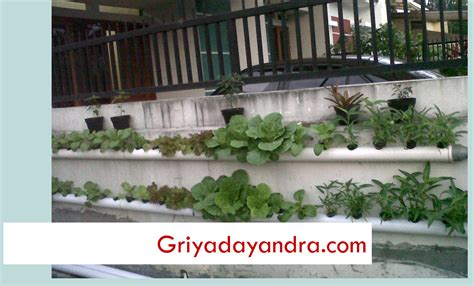 menanam mint hidroponik my home sweet home