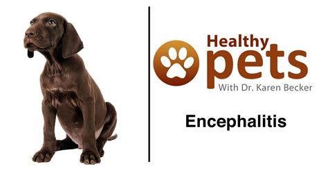 encephalitis dogs can herpes lay dormant for years before outbreak herpes advicer