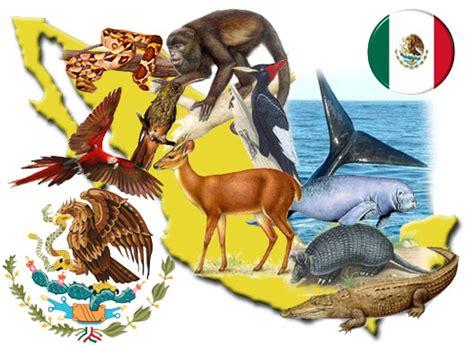 imagenes de animales de mexico animales extintos en mexico animales en peligro de extincion