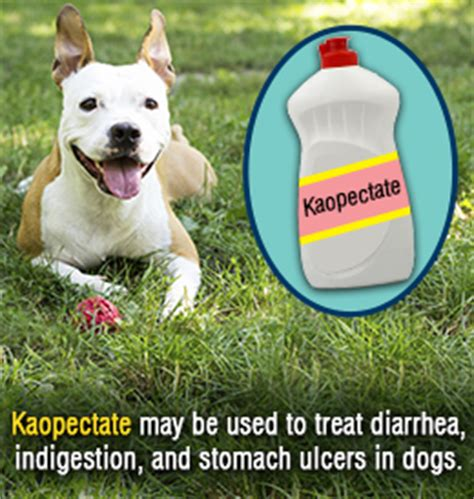 kaopectate dosage for dogs kaopectate for dogs uses and side effects