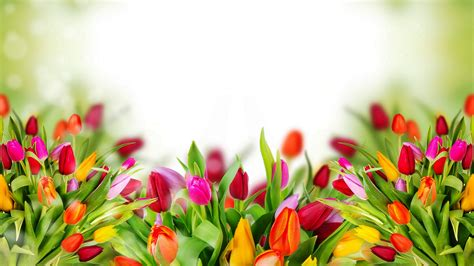 Hd Flower Images colorful tulip flowers background images new hd