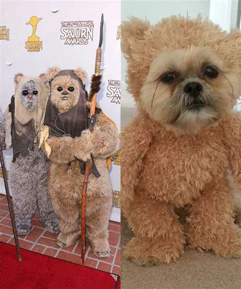 shih tzu teddy costume munchkin quot the teddy quot releases all new exercise abc7news