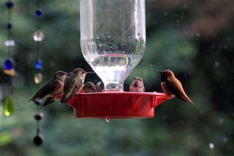 how do you keep hummingbird feeders from freezing ask osu