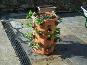 strawberry planter allotment garden diary