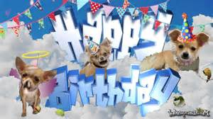 happy birthday chihuahua dog for him youtube