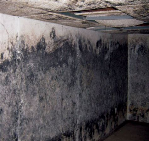 mildew in basement finished basements 171 welcome to property source nation