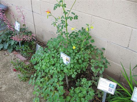 The Gardens At Columbine by Nature S Backyard A Water Wise Garden Plant Of