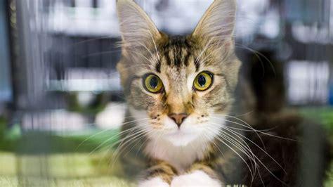 gatos en casa cinco beneficios para los ni 241 os que viven con gatos en