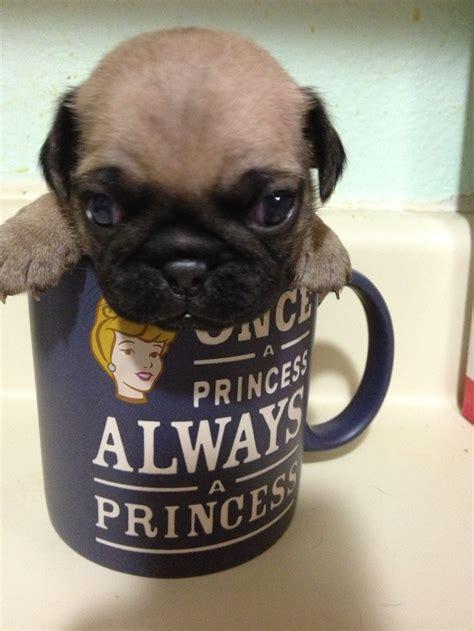 Mug Ideas another pug in a mug ideas pinterest animal