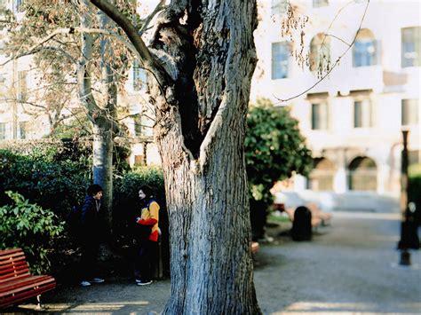 giardini di venezia come rinascono i giardini reali di venezia