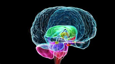 neuroeducacin en el aula neuroeducaci 211 n cerebro y mente en el aula ined21