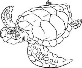 sea animals coloring pages to print pics photos coloring pages sea animals