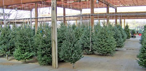 home depot live christmas trees for sale home depot real tree prices premium trees 28 tree stand prices buy cheap