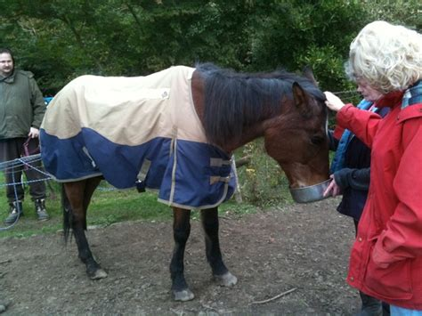 low cost euthanasia programs sound equine options