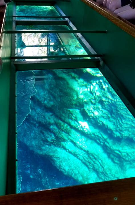 glass bottom boat tours in florida silver springs state park wild monkeys and glass bottom