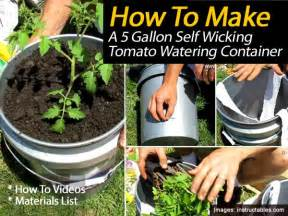 make a 5 gallon tomato growing self wicking