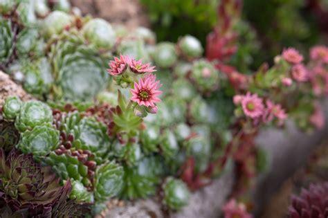 Beginner S Guide To Growing Succulents Garden - succulents grow guide gardenersworld