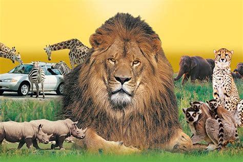 how to create african safari home d 233 cor home interior design image gallery lion safari