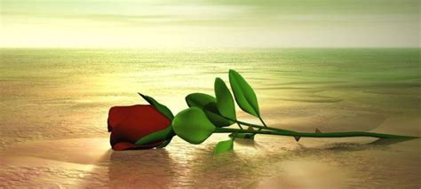 imagenes rosas en el mar fotos de rosas en el mar imagui