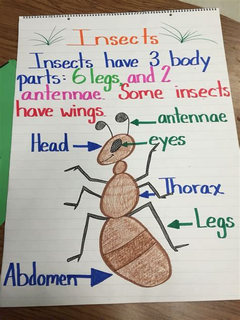 images of bee curriculum for preschool 1264 fantastiche immagini su preschool ideas su pinterest