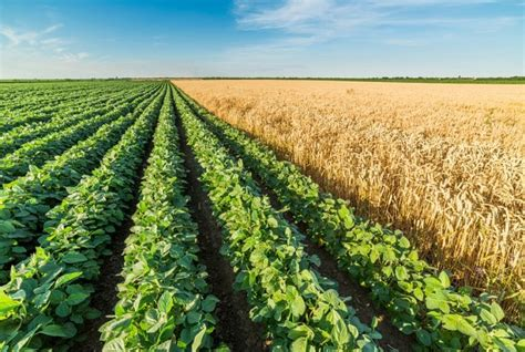Can Soybeans Be Planted To Detox Land by Gmo Pros And Cons Are They Worth It We Take A Look